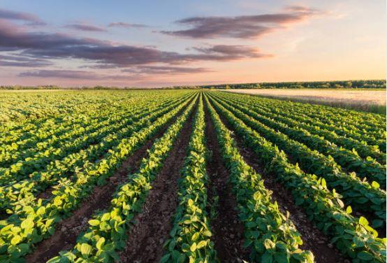 Agricultores y ganaderos garantizan la producción y suspenden movilizaciones.